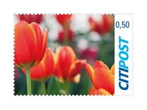 """Markenheft Postkarte """"Tulpe"""" 0,50 €"""